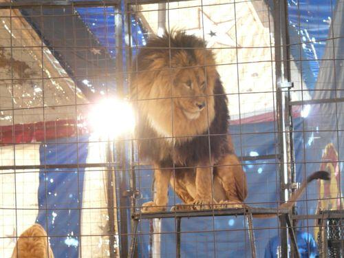 Circus 09 005